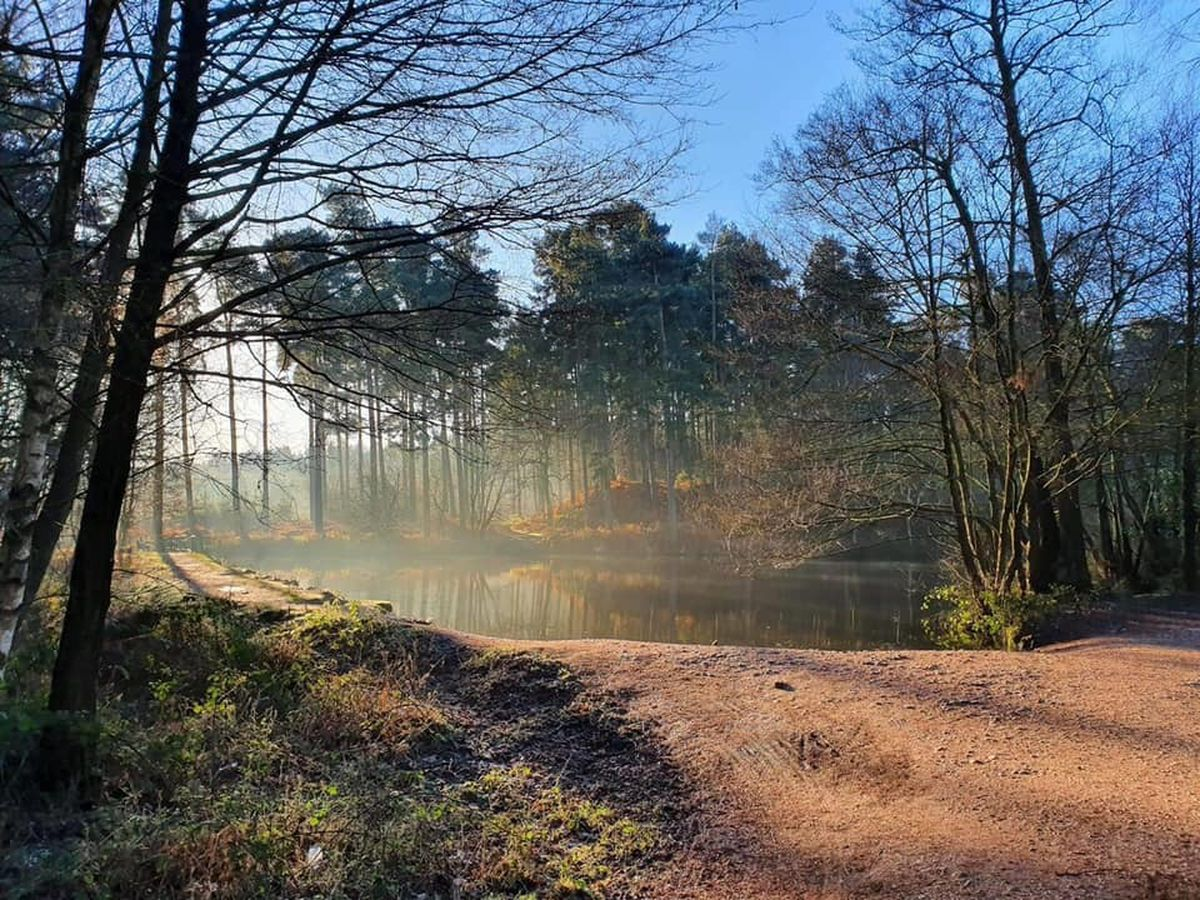Cannock Chase Staffordshire - home of a NetwalkIN event